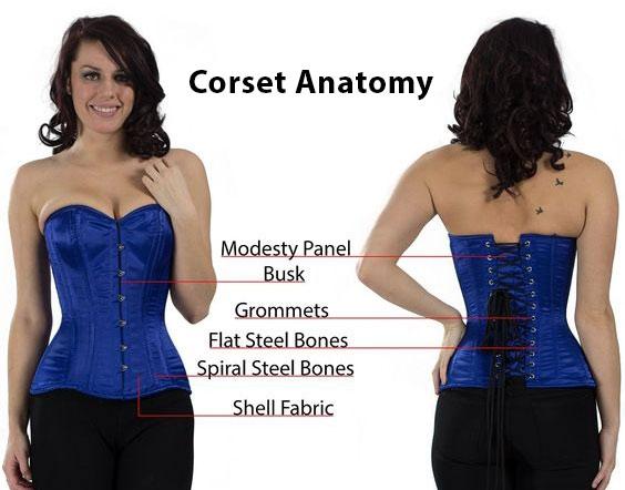 anatomy-corset-parts-of-corset